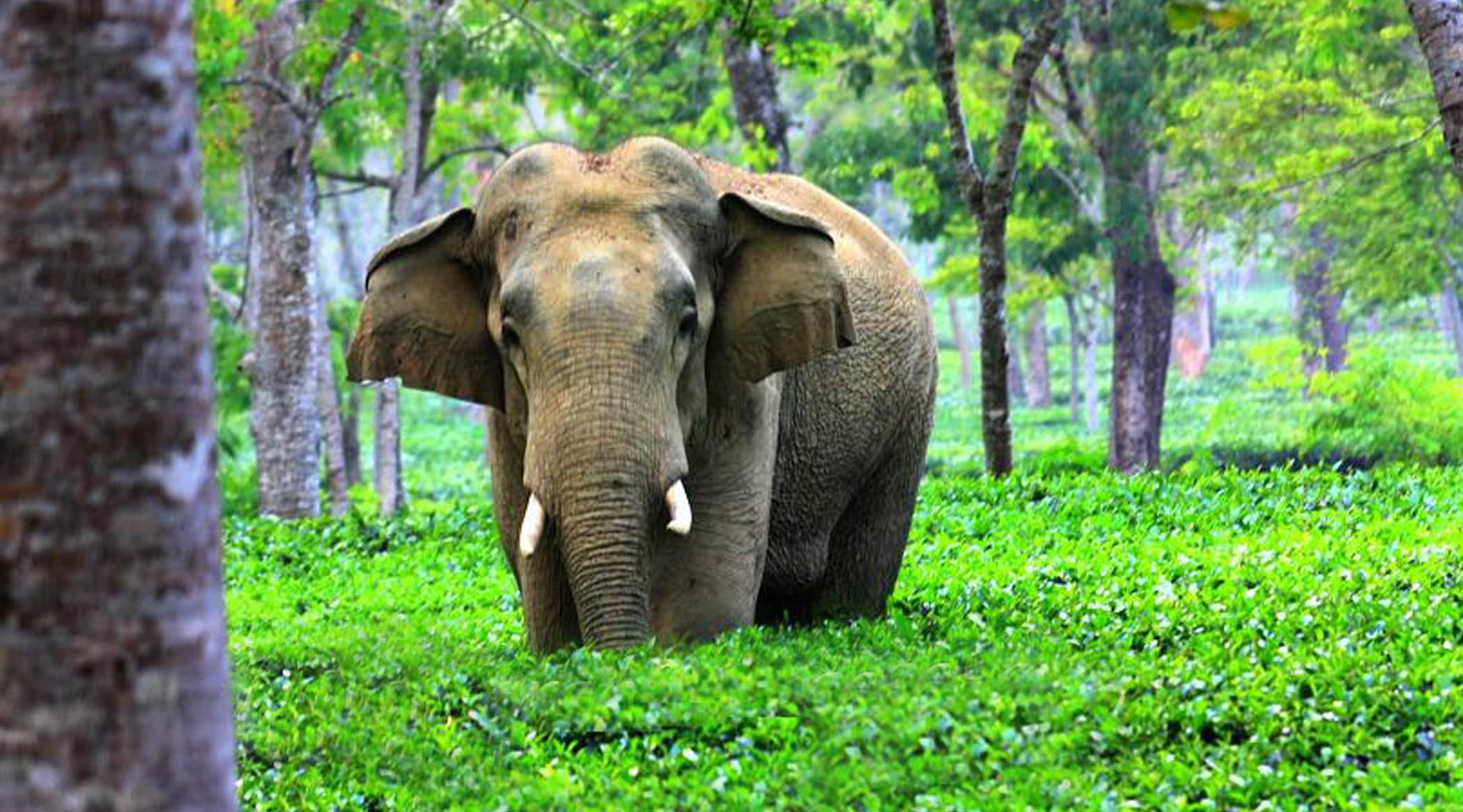 north east tour packages from Guwahati
